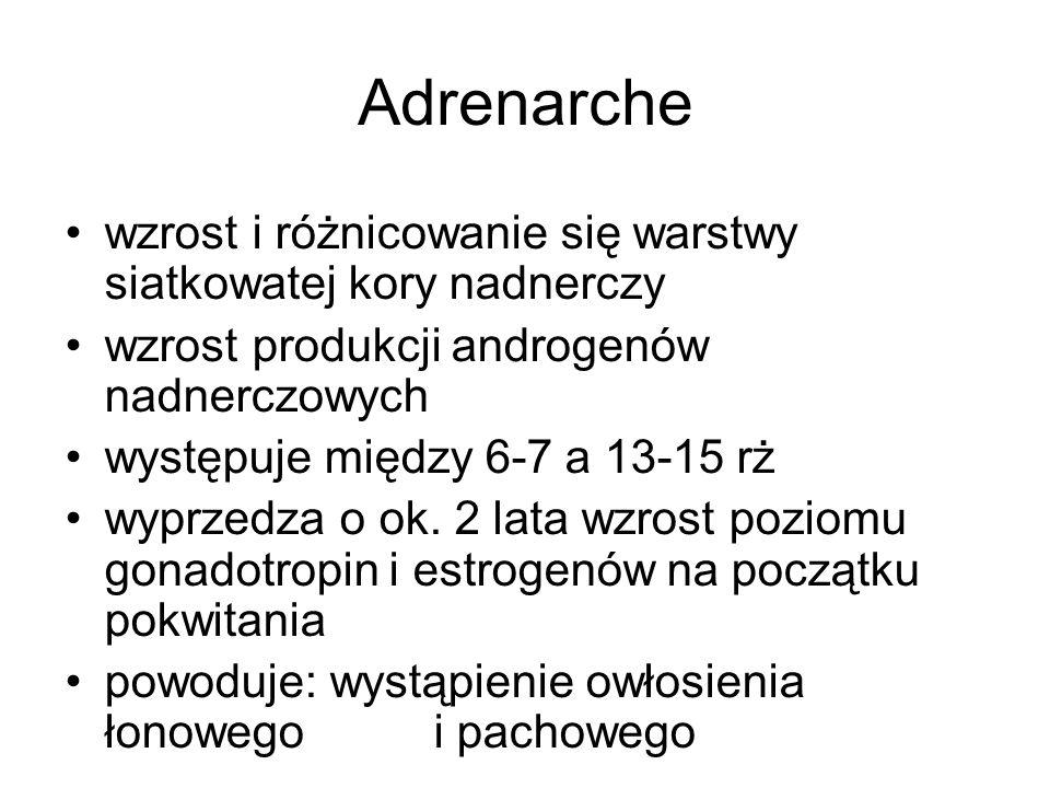 Adrenarche wzrost i różnicowanie się warstwy siatkowatej kory nadnerczy wzrost produkcji androgenów nadnerczowych występuje między 6-7 a 13-15 rż wypr