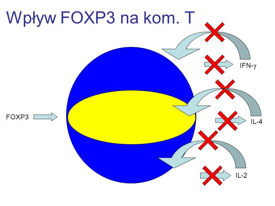 Wpływ FOXP3 na kom. T FOXP3 IL-2 IL-4 IFN- γ