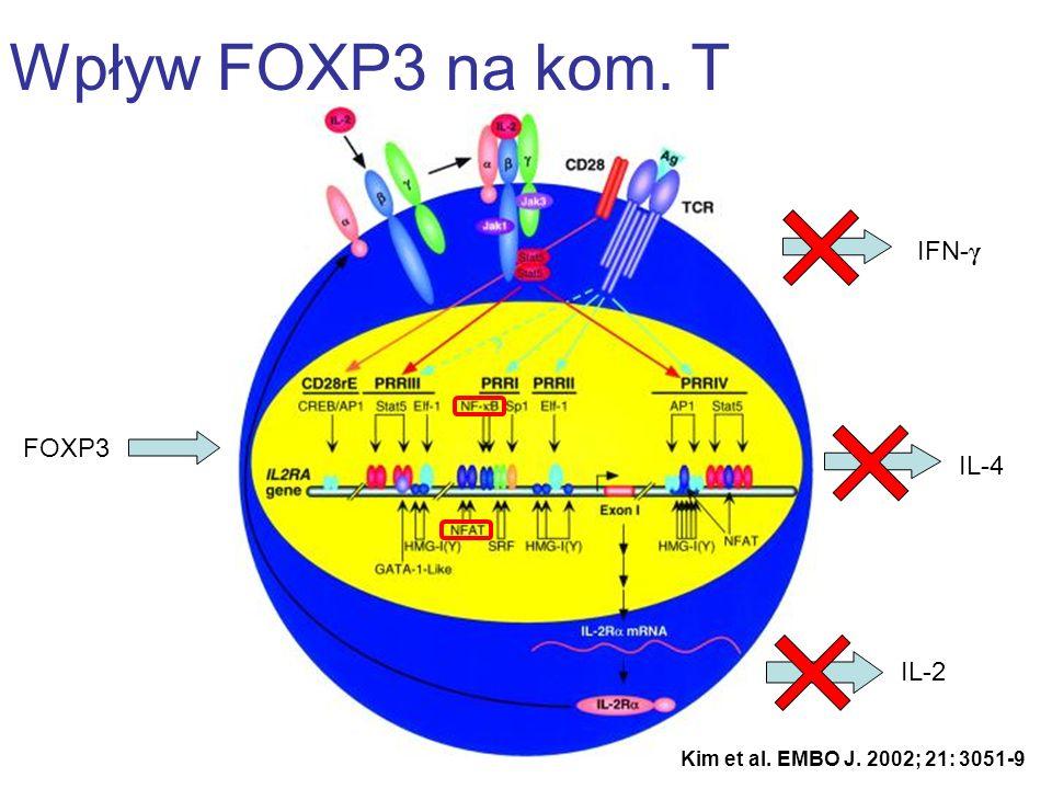 FOXP3 Wpływ FOXP3 na kom. T Kim et al. EMBO J. 2002; 21: 3051-9 IL-2 IL-4 IFN- γ