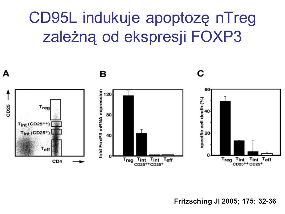 CD95L indukuje apoptozę nTreg zależną od ekspresji FOXP3 Fritzsching JI 2005; 175: 32-36