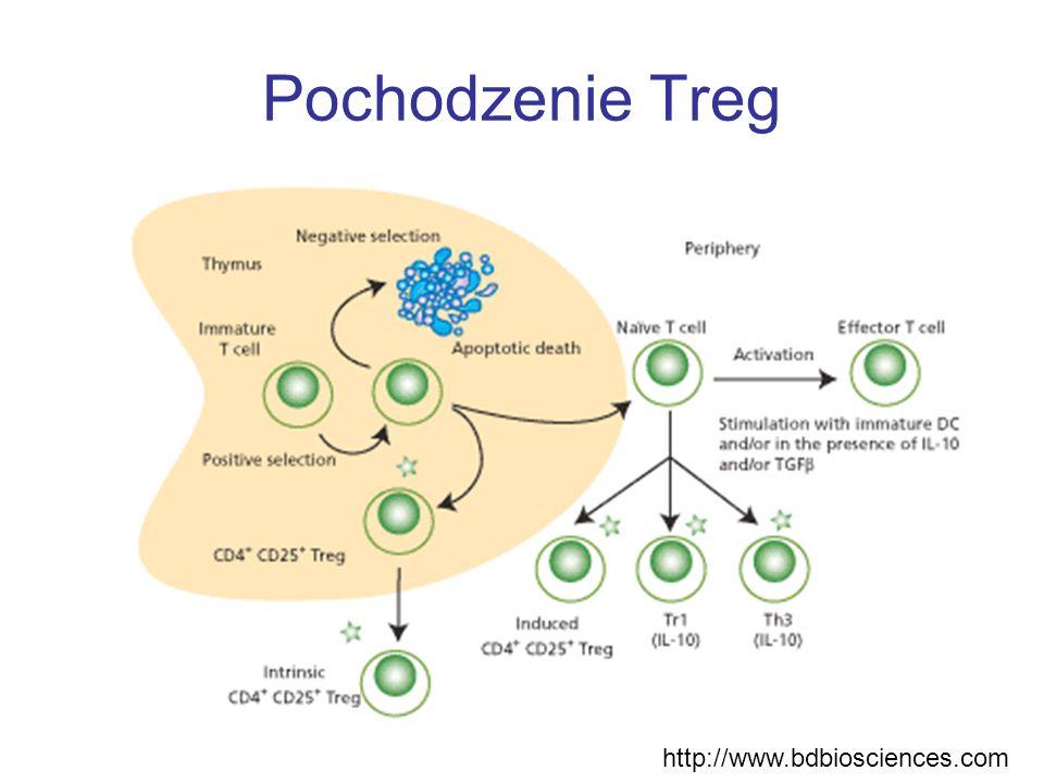 Odpowiedź cytotoksyczna limfocytów Treg odbywa się przy udziale granzymów Shevah et al.