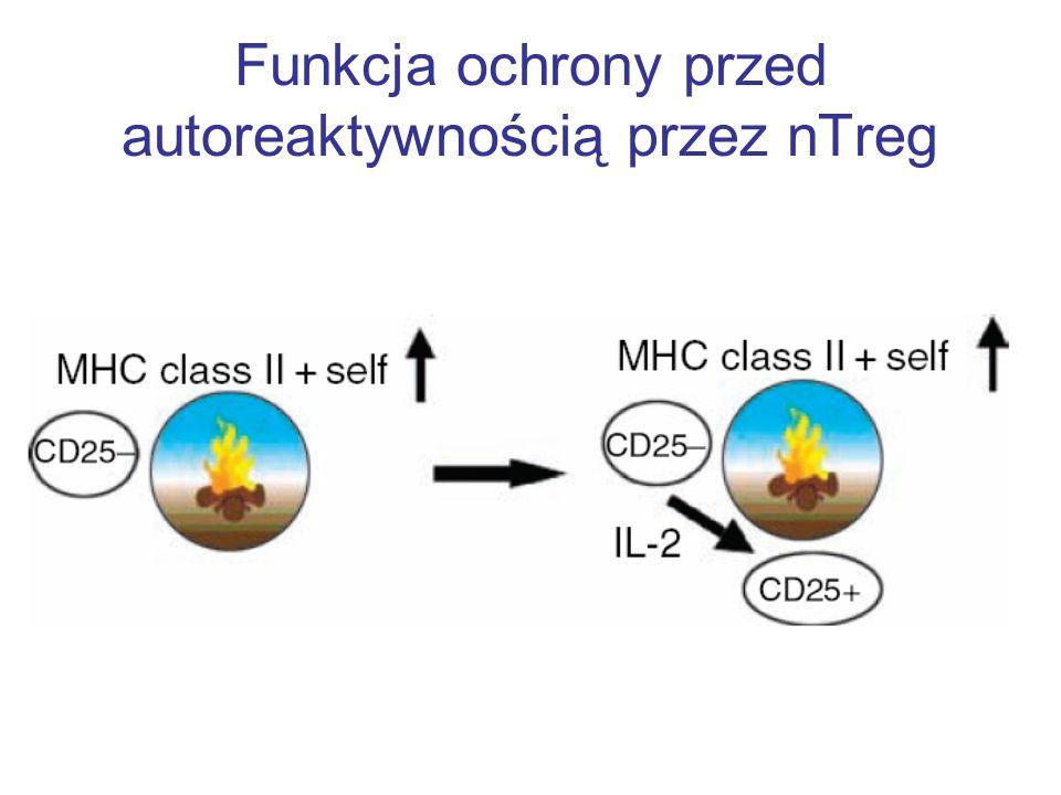 Bezpośredni kontakt Treg z kom.efektorowymi stanowi głowny mechanizm immunosupresyjny Chen et al.
