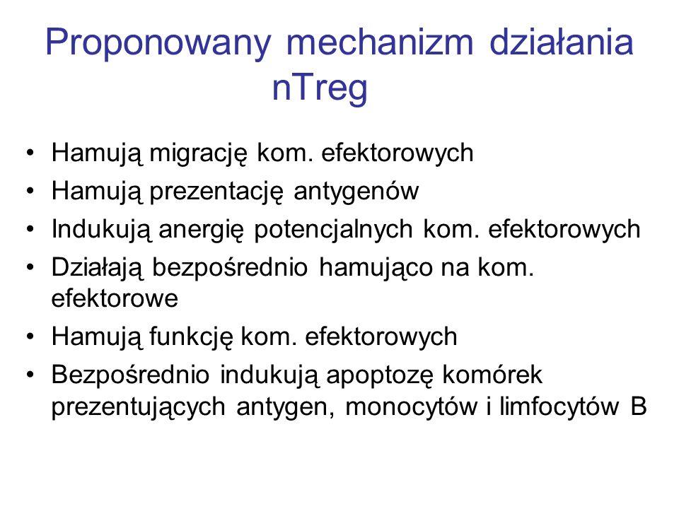 Proponowany mechanizm działania nTreg Hamują migrację kom. efektorowych Hamują prezentację antygenów Indukują anergię potencjalnych kom. efektorowych