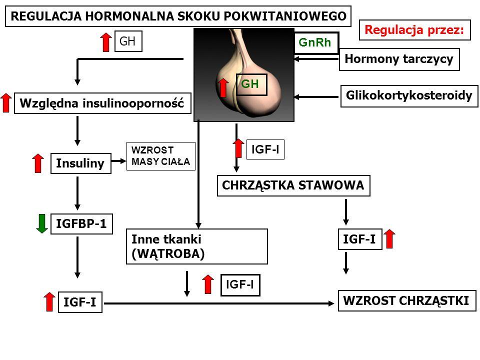 REGULACJA HORMONALNA SKOKU POKWITANIOWEGO Względna insulinooporność IGFBP-1 Insuliny Inne tkanki (WĄTROBA) IGF-I Hormony tarczycy IGF-I CHRZĄSTKA STAW