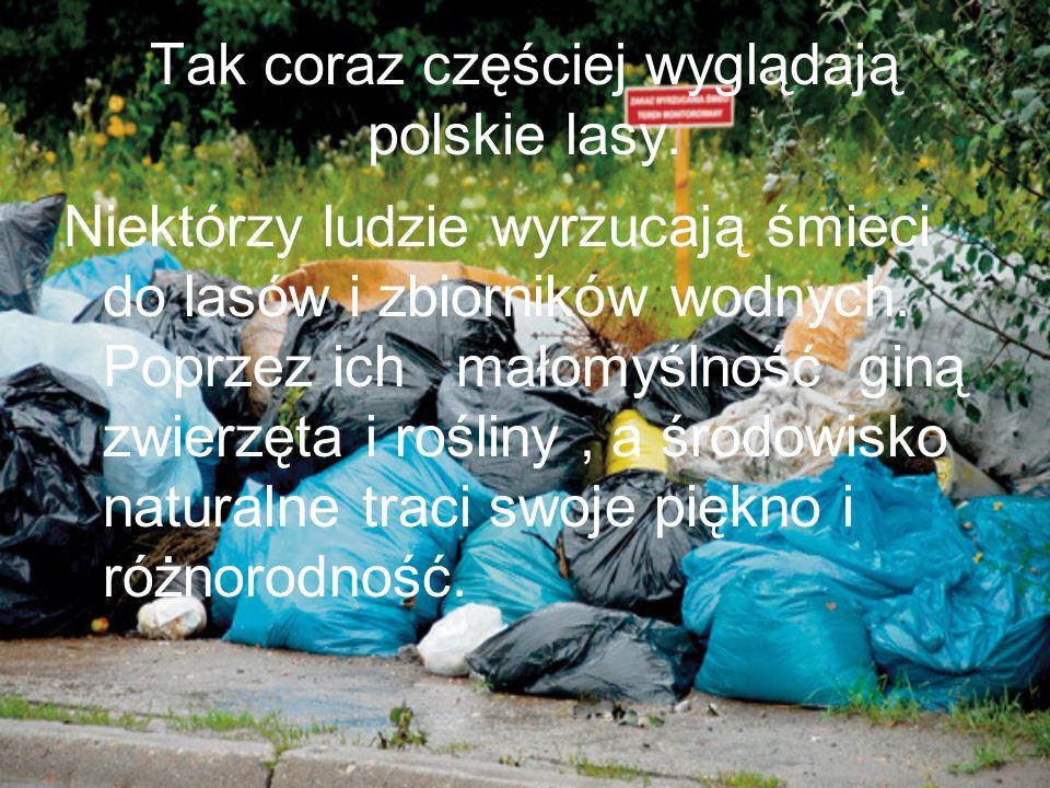 Tak coraz częściej wyglądają polskie lasy. Niektórzy ludzie wyrzucają śmieci do lasów i zbiorników wodnych. Poprzez ich małomyślność giną zwierzęta i