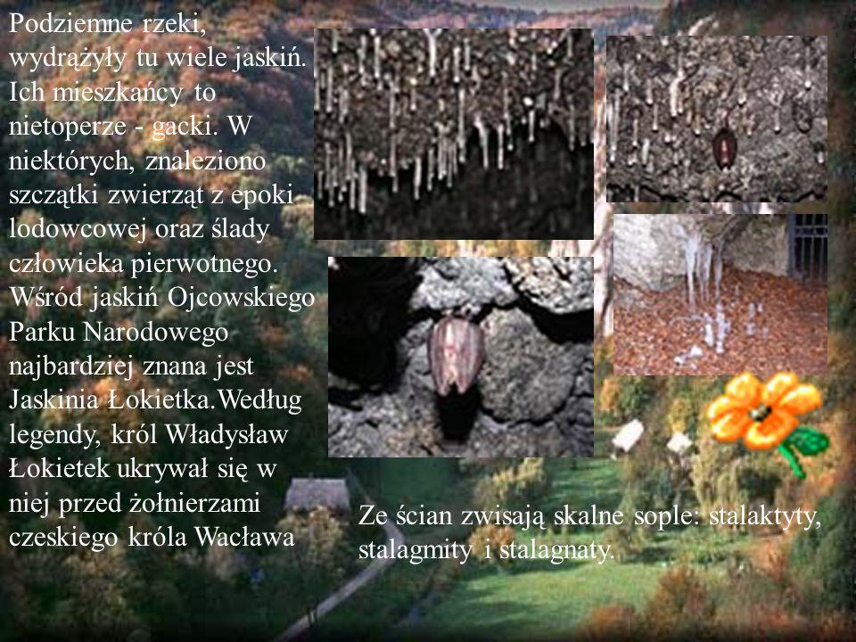 Na terenie Ojcowskiego Parku Narodowego możemy zaobserwować trzy rodzaje lasów: łęgi, grądy i bukowo- jodłowe.