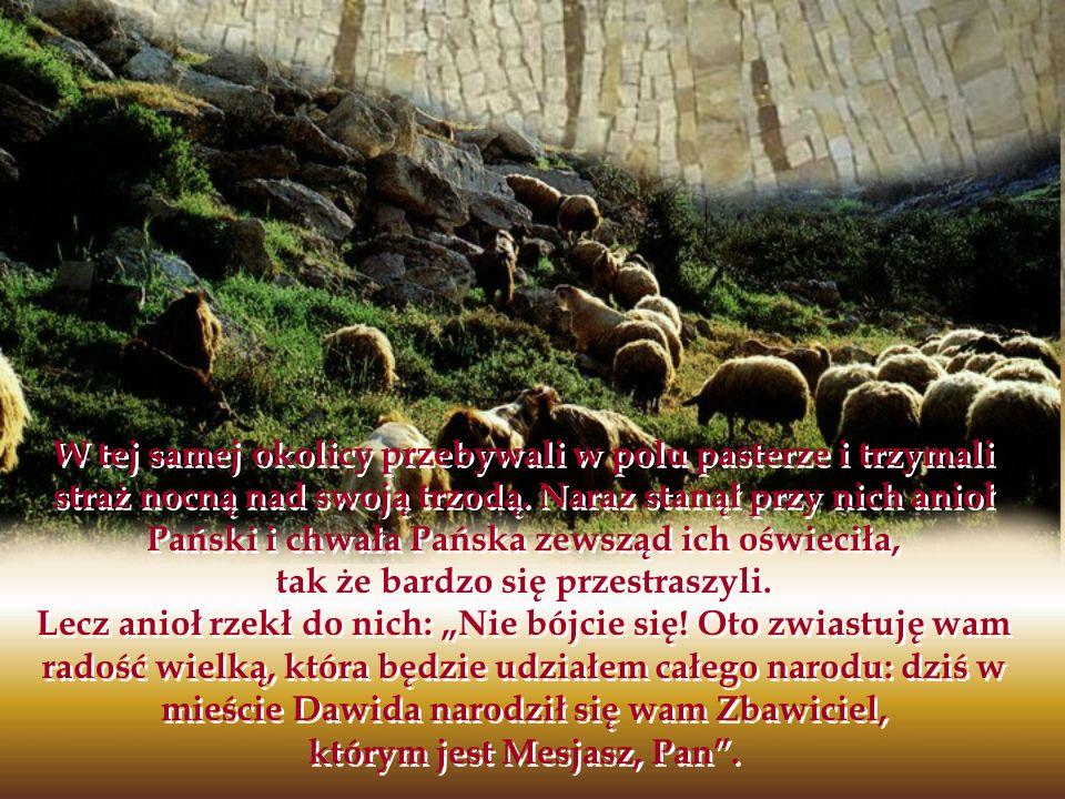 W tej samej okolicy przebywali w polu pasterze i trzymali straż nocną nad swoją trzodą. Naraz stanął przy nich anioł Pański i chwała Pańska zewsząd ic