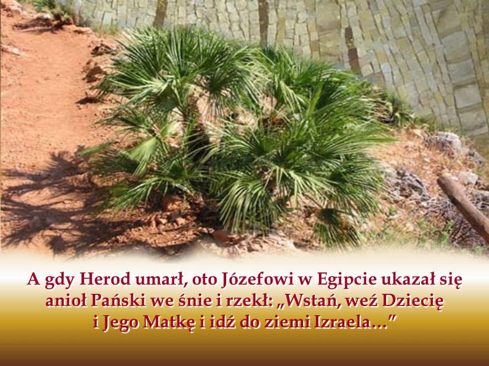 A gdy Herod umarł, oto Józefowi w Egipcie ukazał się anioł Pański we śnie i rzekł: Wstań, weź Dziecię i Jego Matkę i idź do ziemi Izraela…