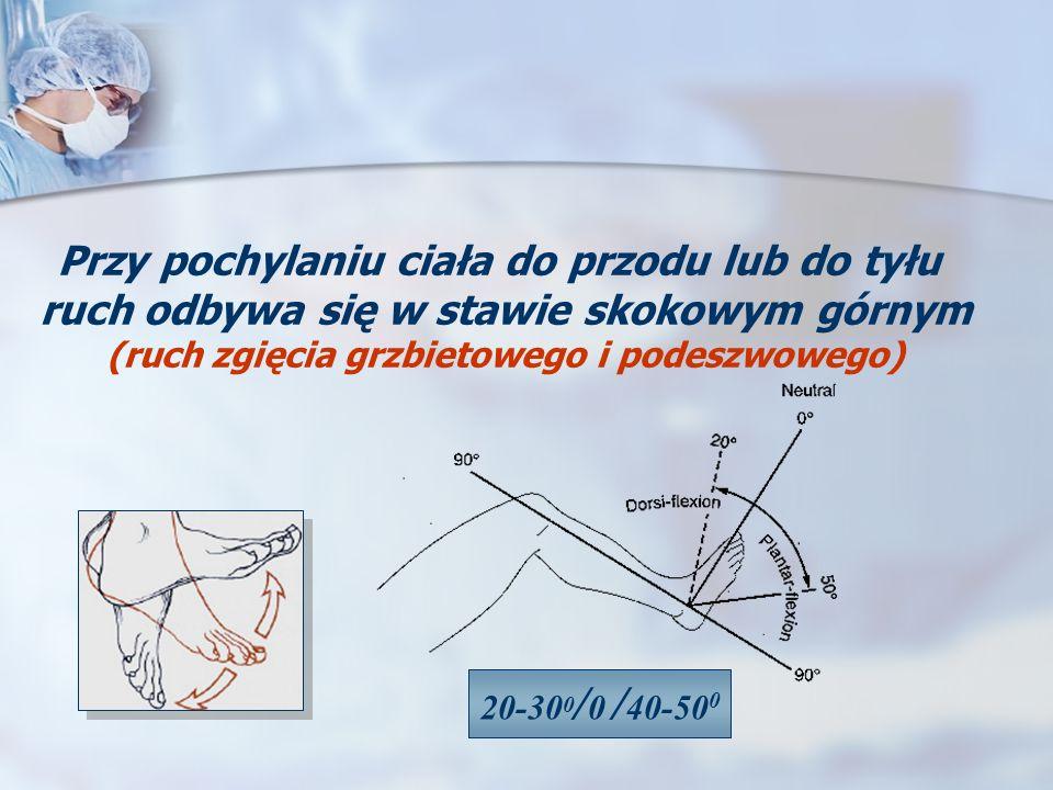 Przy pochylaniu ciała do przodu lub do tyłu ruch odbywa się w stawie skokowym górnym (ruch zgięcia grzbietowego i podeszwowego) 20-30 0 / 0 / 40-50 0