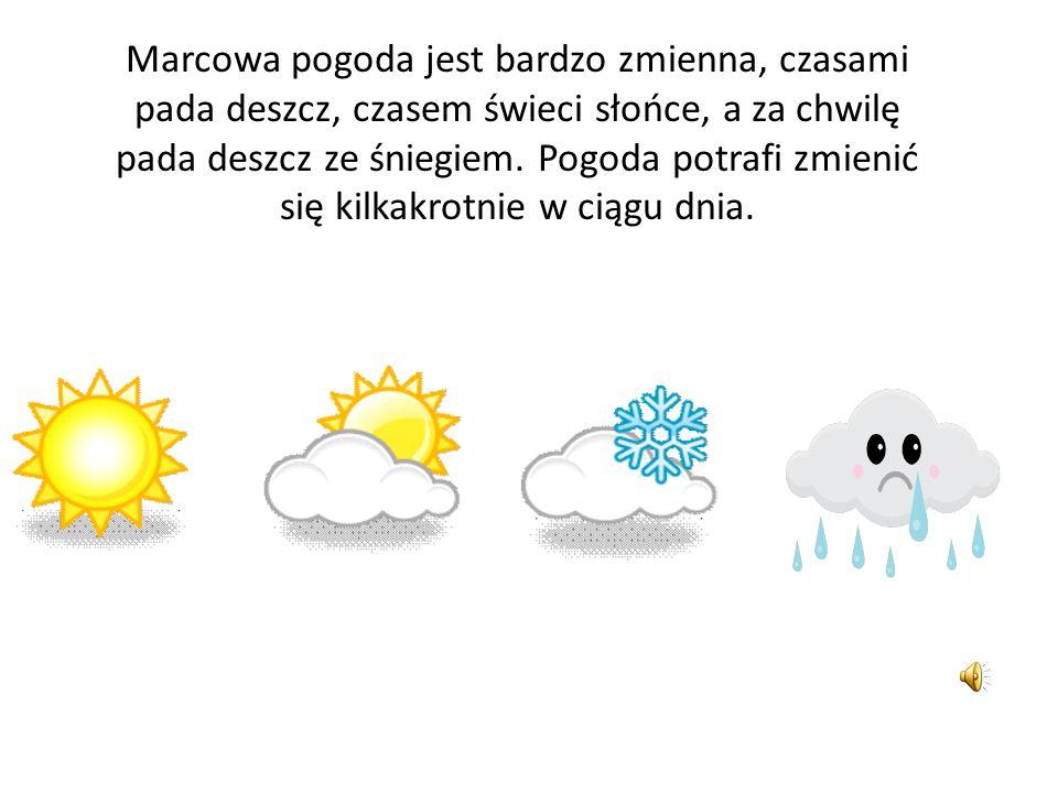 Marcowa pogoda jest bardzo zmienna, czasami pada deszcz, czasem świeci słońce, a za chwilę pada deszcz ze śniegiem.