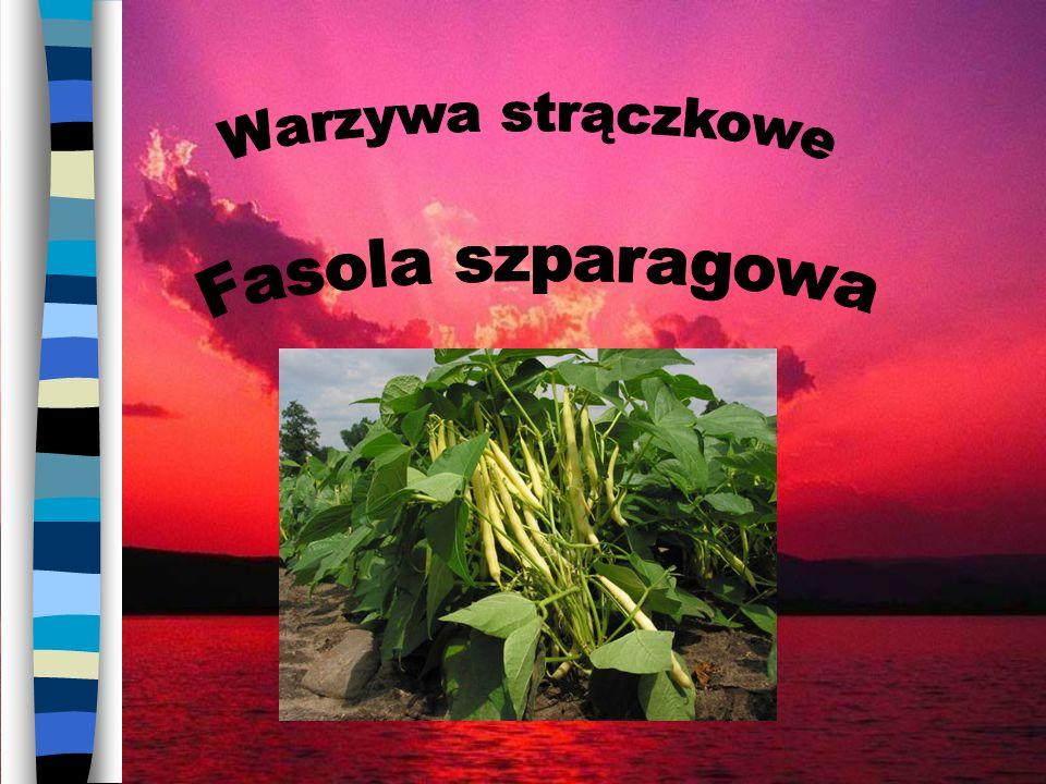 Marchew i gruszka 30 – 11 = 19 [%] – wapń (Ca) – więcej w marchwi 39 – 13 = 26 [%] – fosfor (P) – więcej w marchwi 16 – 9 = 7 [%] – karoten – więcej w gruszce Sucha masa % Cukry ogółem % Białko %Węgiel mg% Karoten % Wapń mg% Fosfor % 96,515,593039 Marchew Wapń %Fosfor %Karoten % 111316 Gruszka
