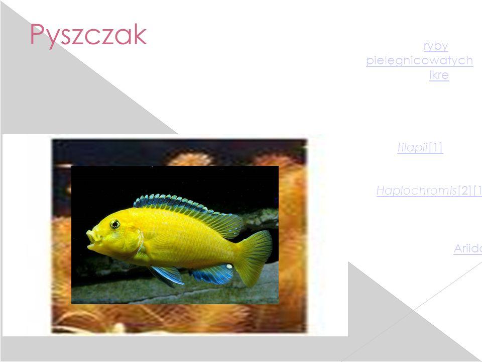 Pyszczak Pyszczak, gębacz – nazwa stosowana w odniesieniu do ryby (głównie z rodziny pielęgnicowatych), która inkubuje (wylęga) ikrę we własnej jamie
