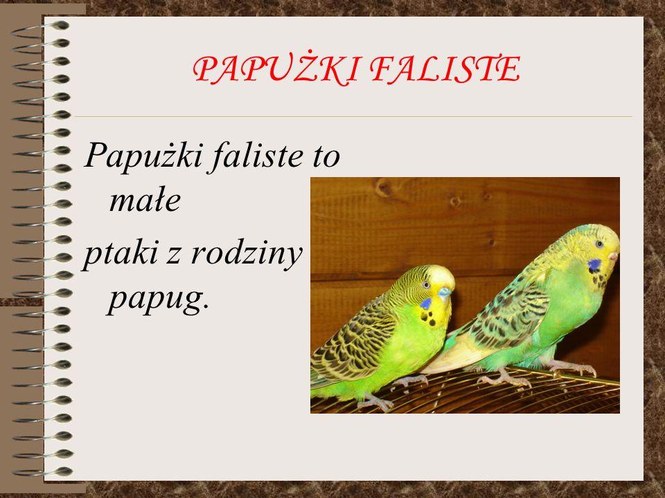 PAPUŻKI FALISTE Papużki zamieszkują główne południowe regiony Australii.