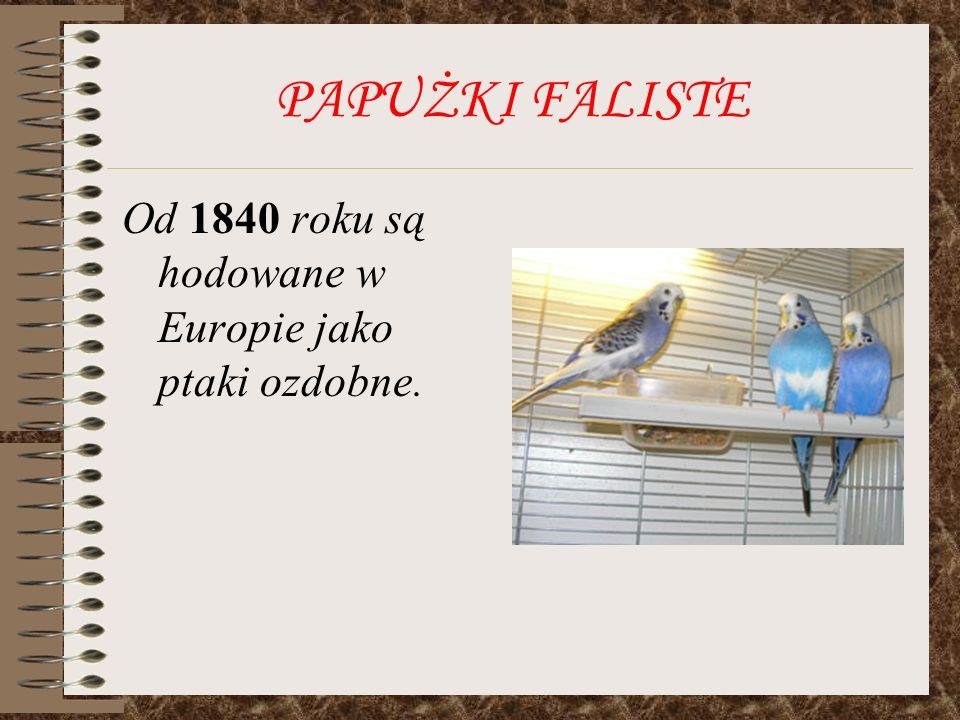 PAPUŻKI FALISTE Od 1840 roku są hodowane w Europie jako ptaki ozdobne.