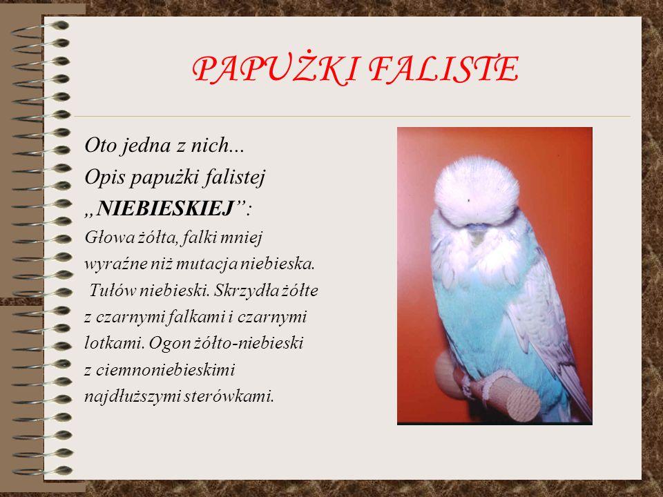 PAPUŻKI FALISTE Oto jedna z nich... Opis papużki falistej NIEBIESKIEJ: Głowa żółta, falki mniej wyraźne niż mutacja niebieska. Tułów niebieski. Skrzyd