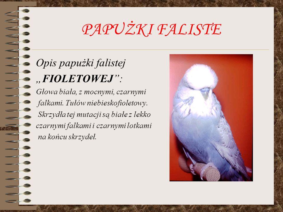 PAPUŻKI FALISTE Opis papużki falistej FIOLETOWEJ: Głowa biała, z mocnymi, czarnymi falkami. Tułów niebieskofioletowy. Skrzydła tej mutacji są białe z