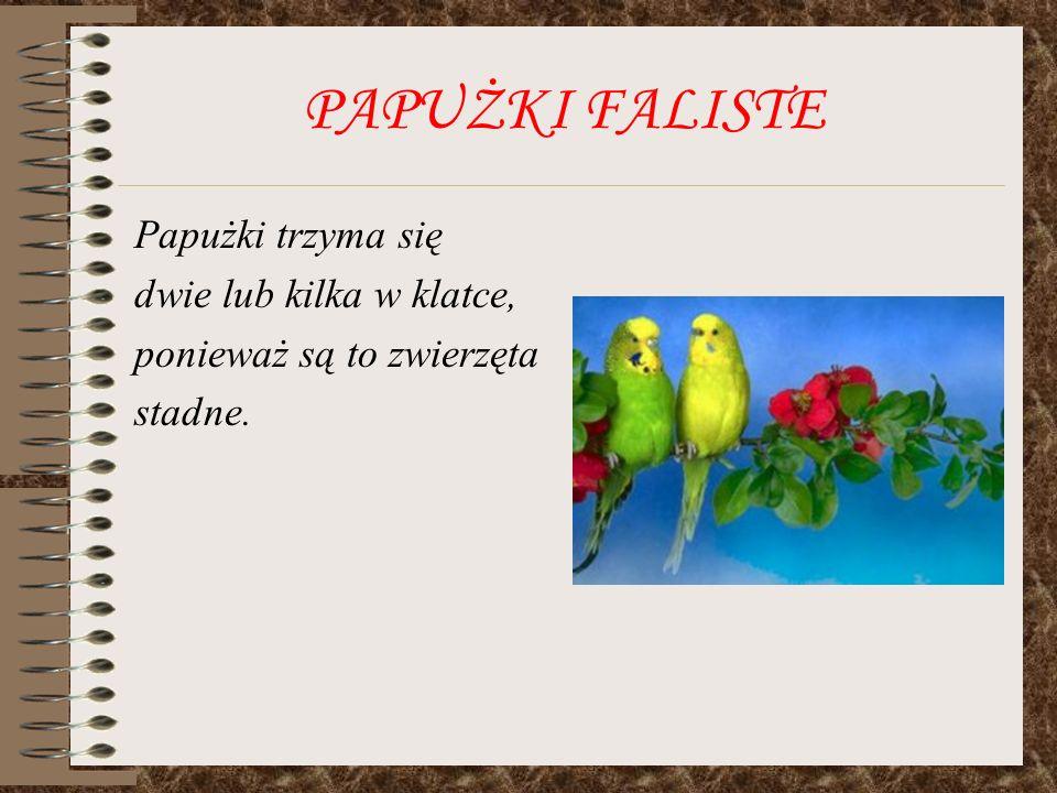 PAPUŻKI FALISTE Papużki hodowlane bardzo łatwo się oswajają.