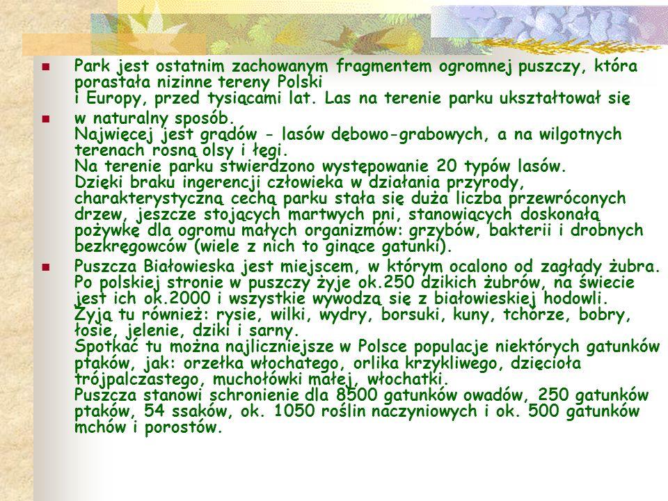 POLESKI PARK NARODOWY Powierzchnia - 9762 ha Powierzchnia obszarów ochrony ścisłej - 0 ha Długość szlaków turystycznych - 75 km