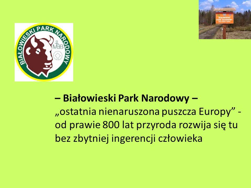 – Białowieski Park Narodowy – ostatnia nienaruszona puszcza Europy - od prawie 800 lat przyroda rozwija się tu bez zbytniej ingerencji człowieka