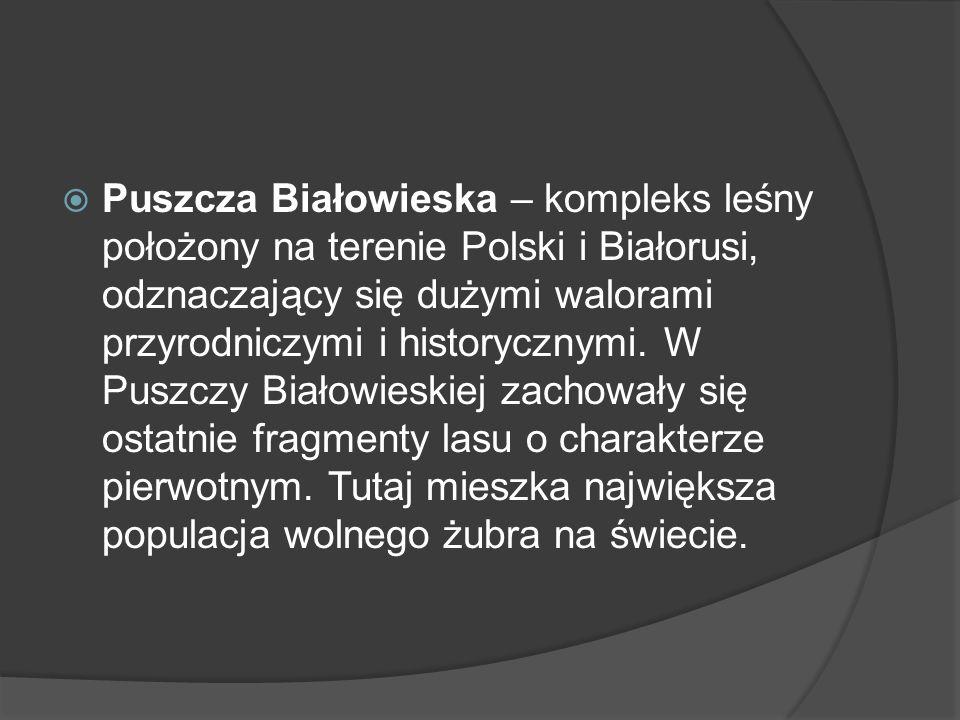 Puszcza Białowieska – kompleks leśny położony na terenie Polski i Białorusi, odznaczający się dużymi walorami przyrodniczymi i historycznymi.