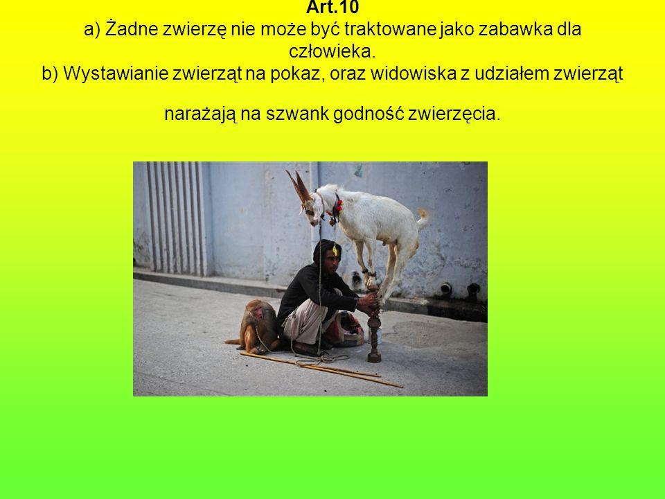 Art.10 a) Żadne zwierzę nie może być traktowane jako zabawka dla człowieka. b) Wystawianie zwierząt na pokaz, oraz widowiska z udziałem zwierząt naraż