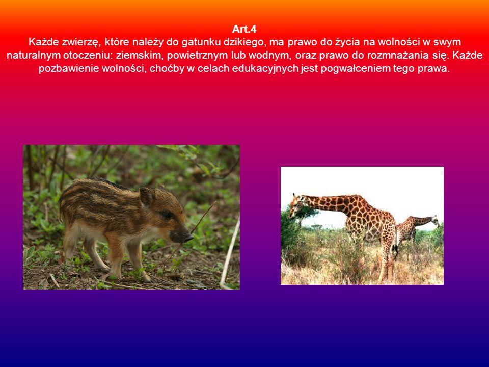 Art.4 Każde zwierzę, które należy do gatunku dzikiego, ma prawo do życia na wolności w swym naturalnym otoczeniu: ziemskim, powietrznym lub wodnym, or