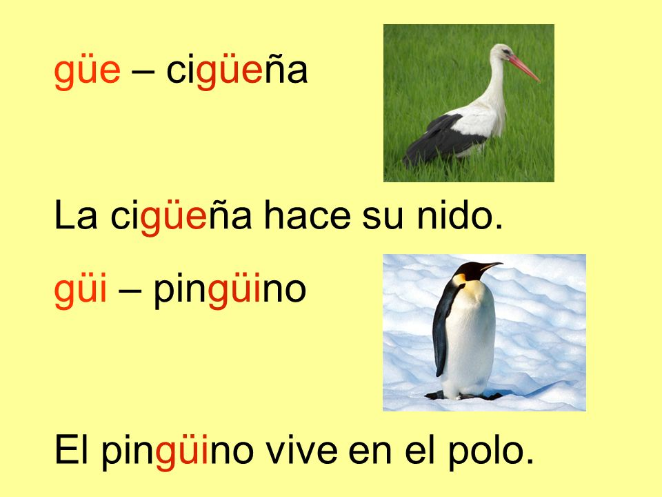 güe – cigüeña La cigüeña hace su nido. El pingüino vive en el polo. güi – pingüino