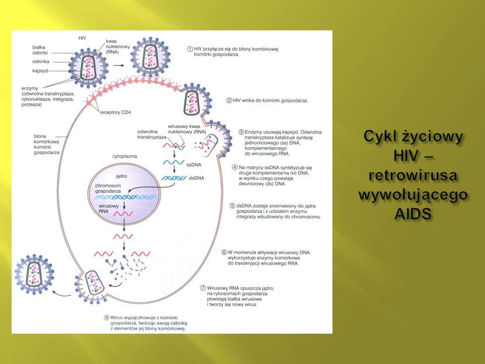 W przypadku autotroficznych bakterii fotosyntezujących energia potrzebna do syntezy związków organicznych pochodzi z fotonów światła słonecznego.