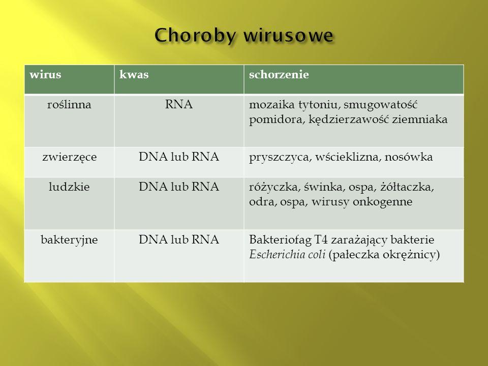 wiruskwasschorzenie roślinnaRNAmozaika tytoniu, smugowatość pomidora, kędzierzawość ziemniaka zwierzęceDNA lub RNApryszczyca, wścieklizna, nosówka ludzkieDNA lub RNAróżyczka, świnka, ospa, żółtaczka, odra, ospa, wirusy onkogenne bakteryjneDNA lub RNABakteriofag T4 zarażający bakterie Escherichia coli (pałeczka okrężnicy)