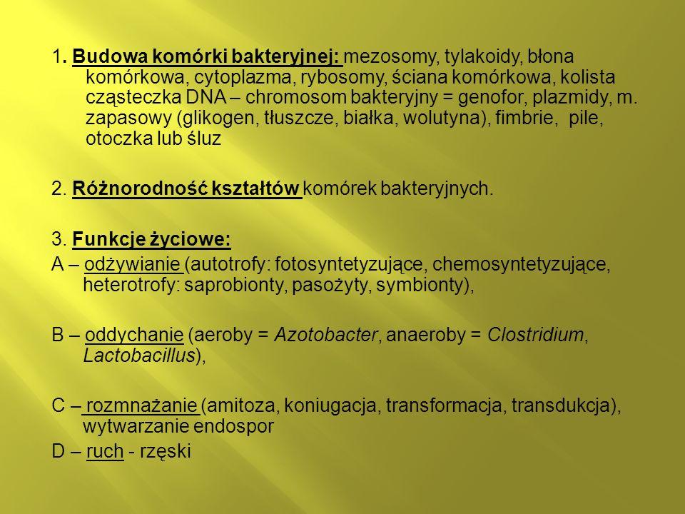 1. Budowa komórki bakteryjnej: mezosomy, tylakoidy, błona komórkowa, cytoplazma, rybosomy, ściana komórkowa, kolista cząsteczka DNA – chromosom bakter