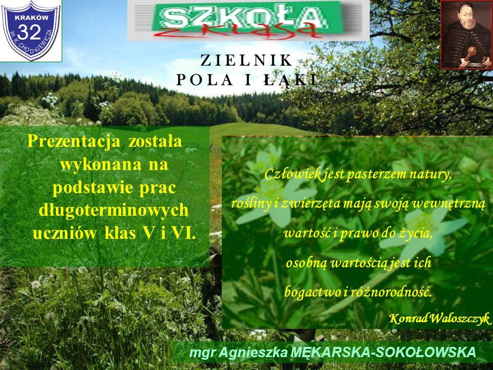 Z I E L N I K P O L A I Ł Ą K I mgr Agnieszka MĘKARSKA-SOKOŁOWSKA Prezentacja została wykonana na podstawie prac długoterminowych uczniów klas V i VI.