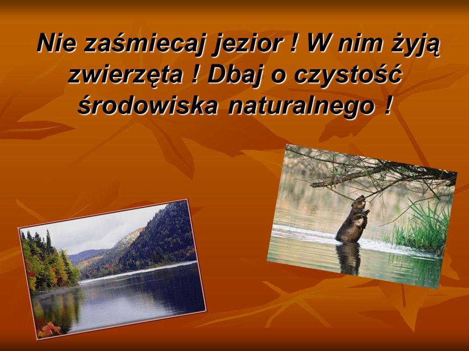 Nie zaśmiecaj jezior ! W nim żyją zwierzęta ! Dbaj o czystość środowiska naturalnego !