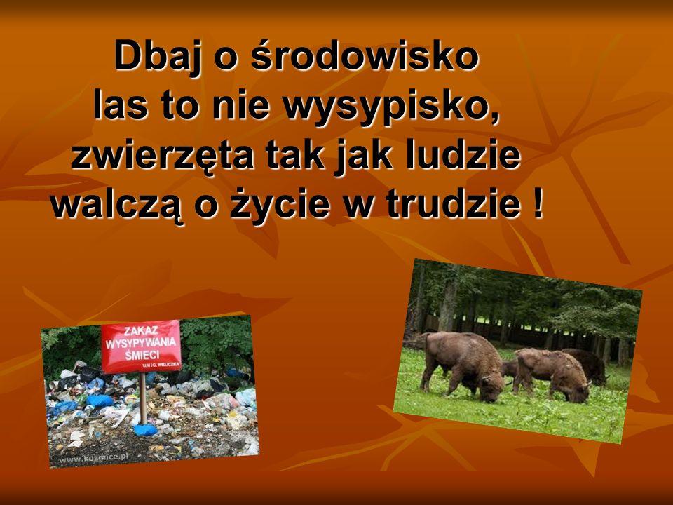 Dbaj o środowisko las to nie wysypisko, zwierzęta tak jak ludzie walczą o życie w trudzie !