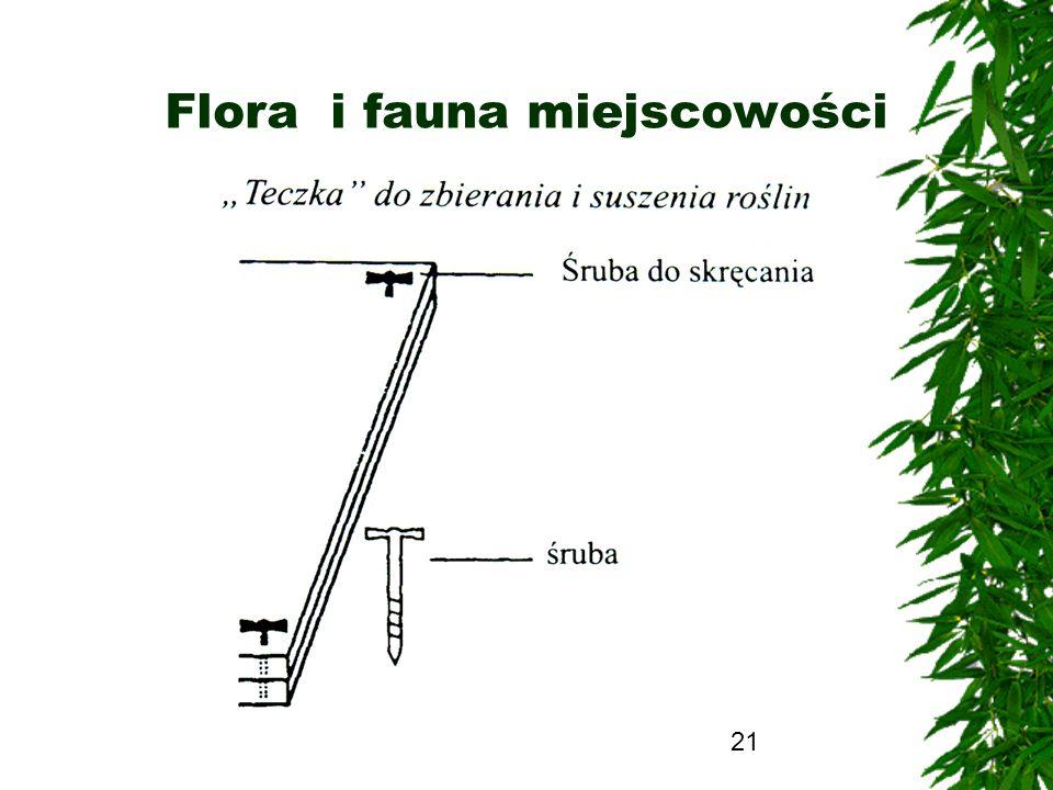 21 Flora i fauna miejscowości
