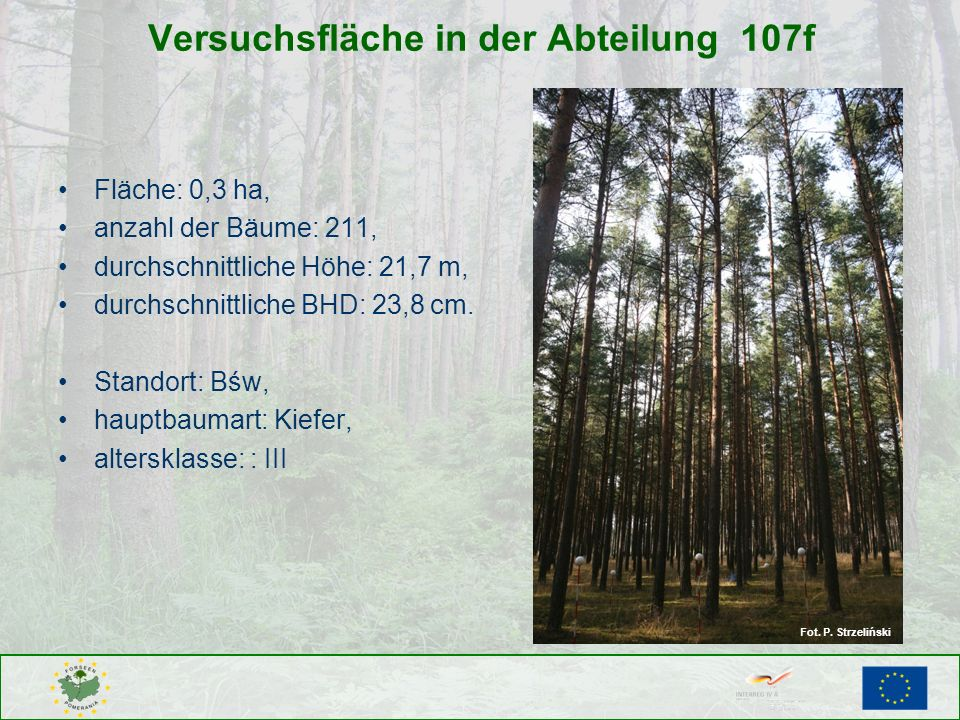 Versuchsfläche in der Abteilung 107f Fläche: 0,3 ha, anzahl der Bäume: 211, durchschnittliche Höhe: 21,7 m, durchschnittliche BHD: 23,8 cm. Standort:
