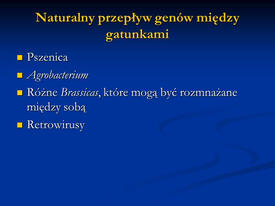 Naturalny przepływ genów między gatunkami Pszenica Pszenica Agrobacterium Agrobacterium Różne Brassicas, które mogą być rozmnażane między sobą Różne B
