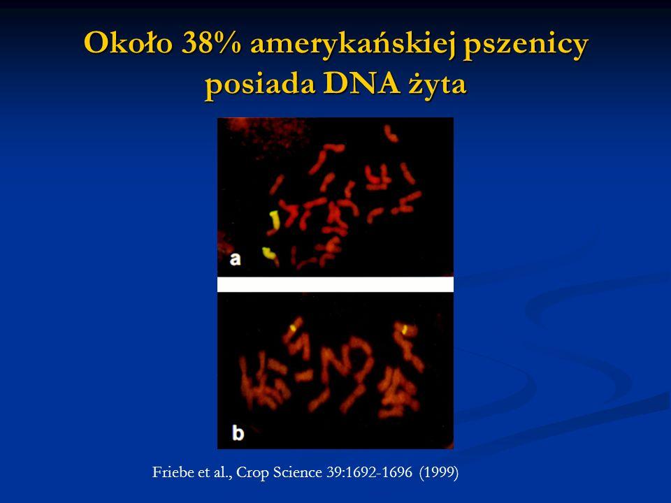 Około 38% amerykańskiej pszenicy posiada DNA żyta Friebe et al., Crop Science 39:1692-1696 (1999)