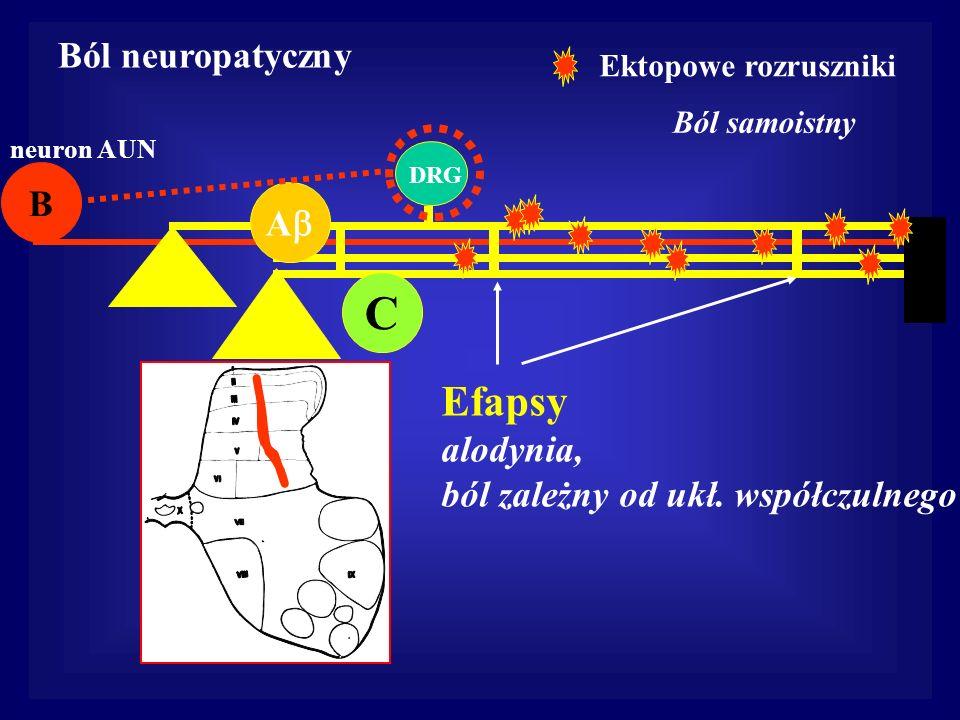 C A B neuron AUN DRG Ból samoistny Efapsy alodynia, ból zależny od ukł. współczulnego Ból neuropatyczny Ektopowe rozruszniki