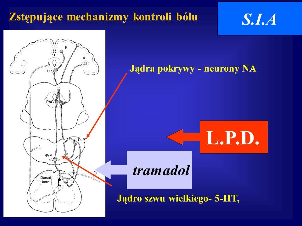 Zstępujące mechanizmy kontroli bólu Jądro szwu wielkiego- 5-HT, Jądra pokrywy - neurony NA S.I.A tramadol L.P.D.