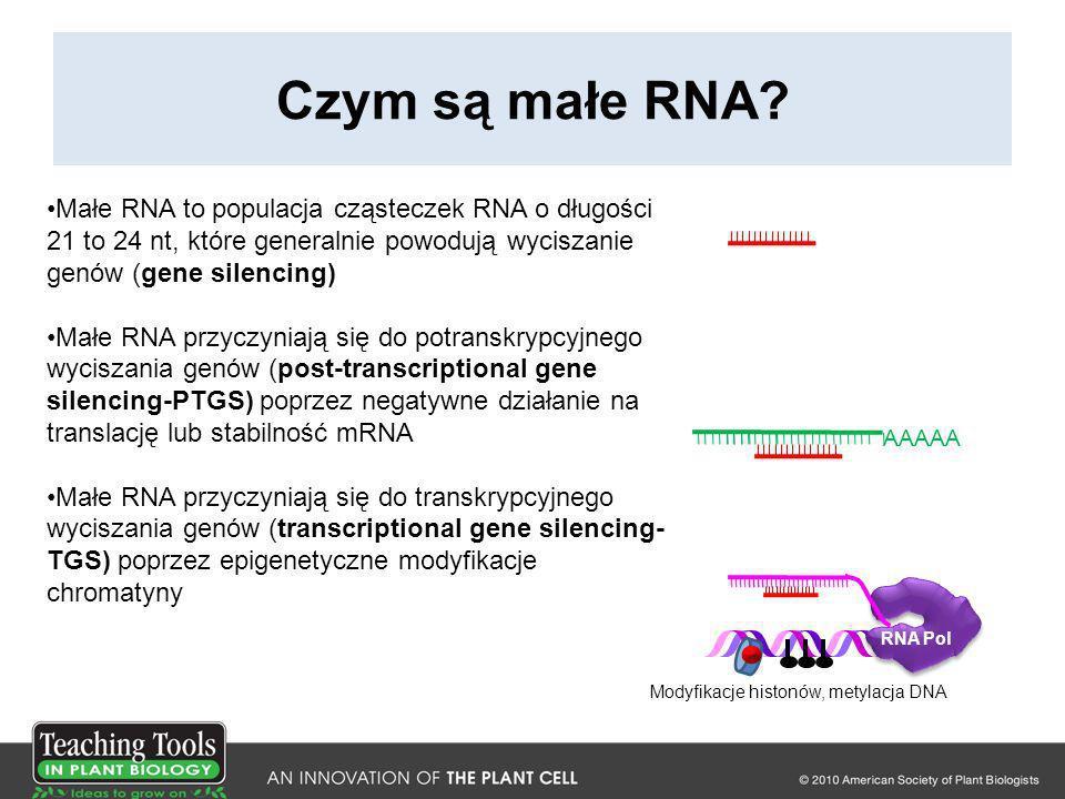 Cele niektórych konserwowanych miRNA Rodzina genowa miRNA Cel (rodzina genów)Funkcja 156Czynniki transkrypcyjne SPL Czas rozwoju 160Czynniki transkrypcyjne ARF Odpowiedź na auksynę, rozwój 165Czynniki transkrypcyjne HD- ZIPIII Rozwój, polarność 172Czynniki transkrypcyjne AP2 Czas rozwoju, tożsamość organów kwiatowych 390TAS3 (tasiRNA), działa na czynniki transkrypcyjne ARF Odpowiedź na auksynę, rozwój 395Transporter siarczanówPobieranie siarczanów 399Ubikwitynacja białekPobieranie fosforanu Adapted from Willmann, M.R., and Poethig, R.S.