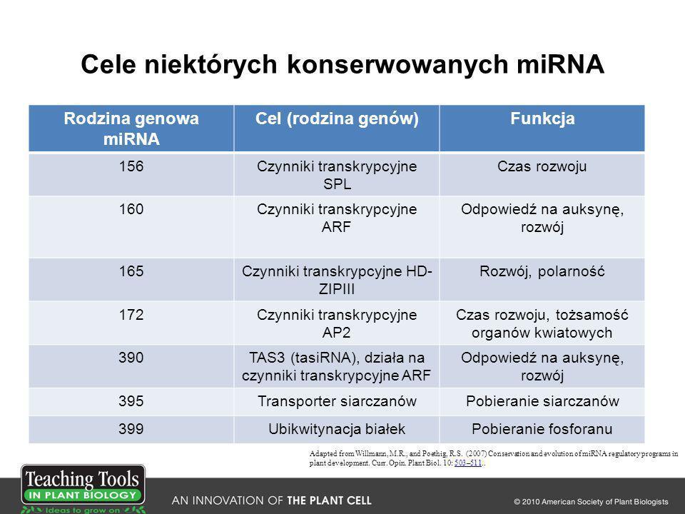Cele niektórych konserwowanych miRNA Rodzina genowa miRNA Cel (rodzina genów)Funkcja 156Czynniki transkrypcyjne SPL Czas rozwoju 160Czynniki transkryp
