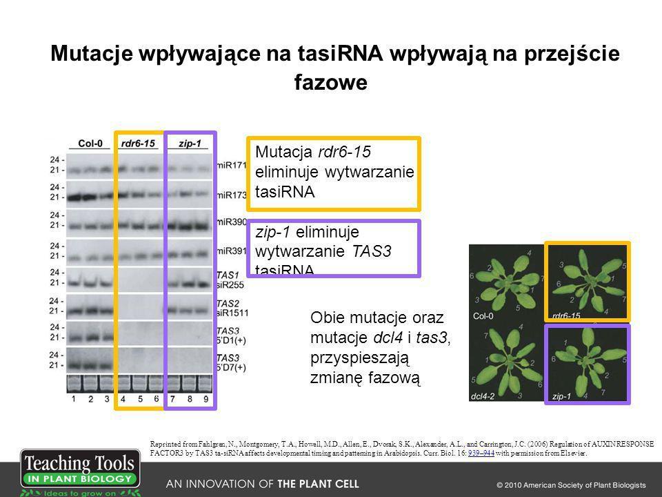 Mutacje wpływające na tasiRNA wpływają na przejście fazowe Reprinted from Fahlgren, N., Montgomery, T.A., Howell, M.D., Allen, E., Dvorak, S.K., Alexa