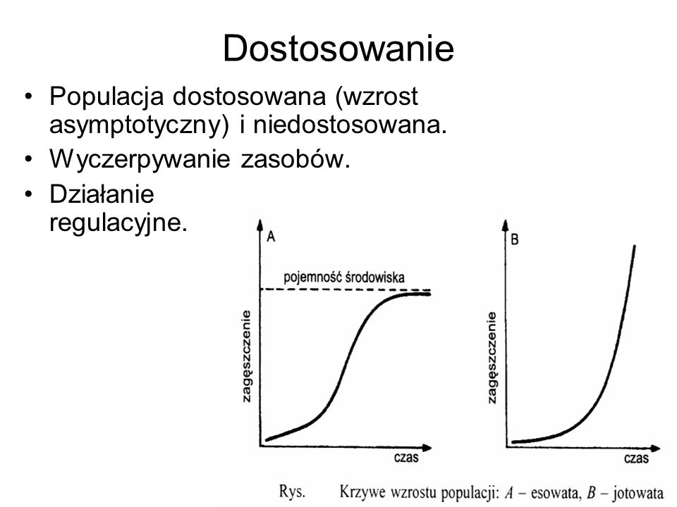 Dostosowanie Populacja dostosowana (wzrost asymptotyczny) i niedostosowana. Wyczerpywanie zasobów. Działanie regulacyjne.