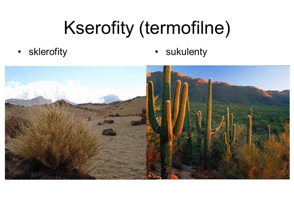 Kserofity (termofilne) sklerofitysukulenty