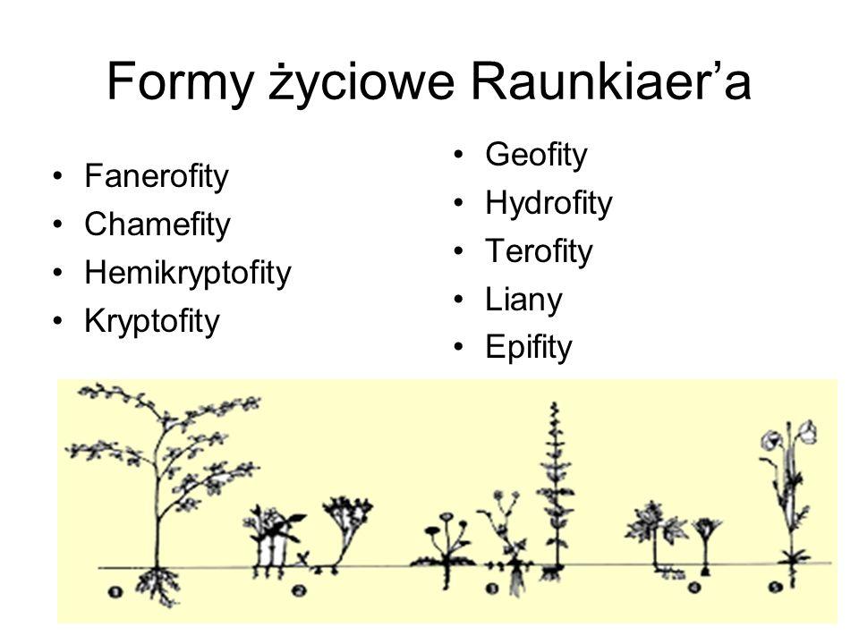 Formy życiowe Raunkiaera Fanerofity Chamefity Hemikryptofity Kryptofity Geofity Hydrofity Terofity Liany Epifity