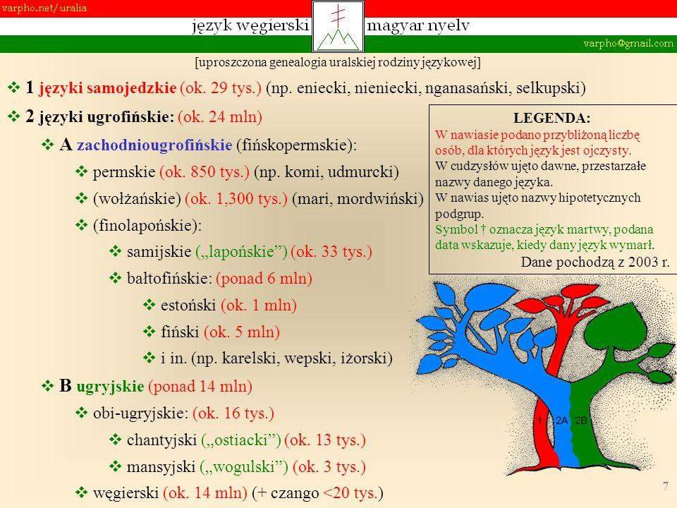 7 [uproszczona genealogia uralskiej rodziny językowej] 1 języki samojedzkie (ok. 29 tys.) (np. eniecki, nieniecki, nganasański, selkupski) 2 języki ug