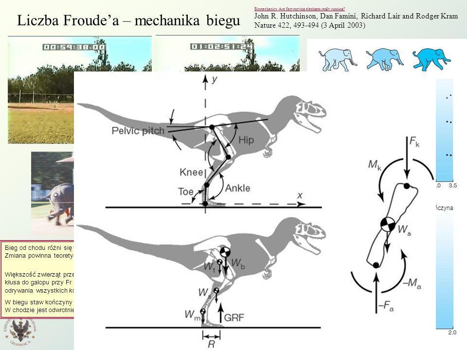 Wstęp do Fizyki Środowiska W7 12 Liczba Froudea – mechanika biegu Biomechanics: Are fast-moving elephants really running? John R. Hutchinson, Dan Fami