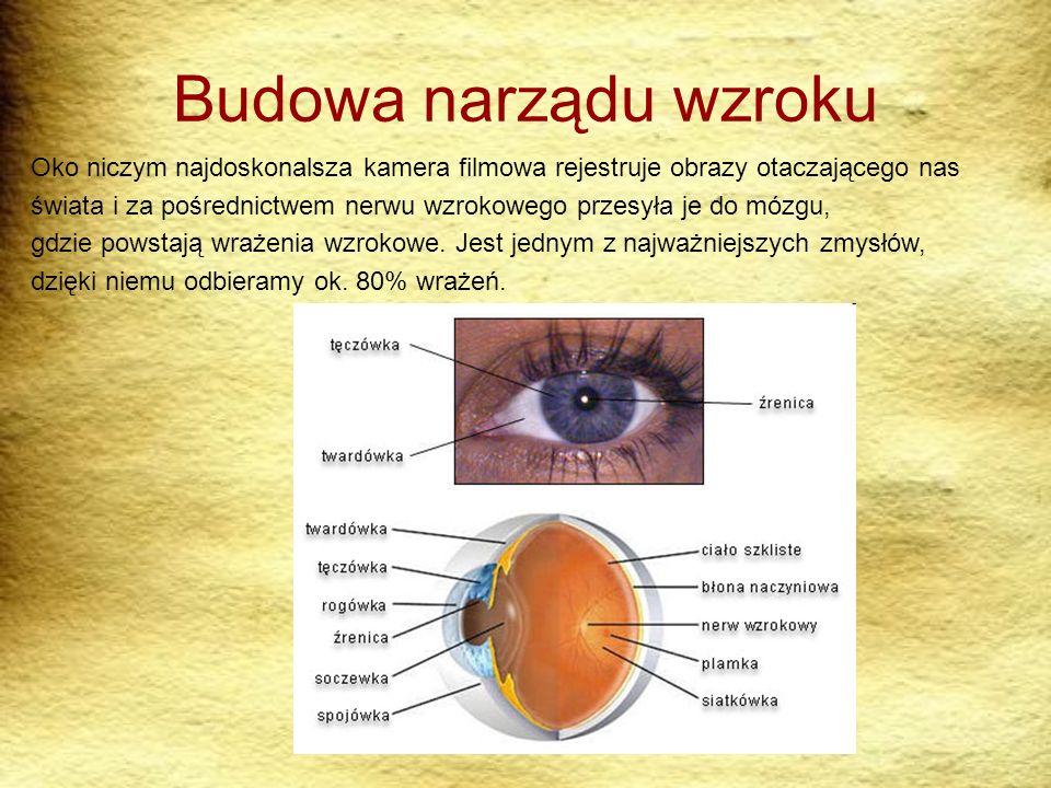 Budowa narządu wzroku Oko niczym najdoskonalsza kamera filmowa rejestruje obrazy otaczającego nas świata i za pośrednictwem nerwu wzrokowego przesyła