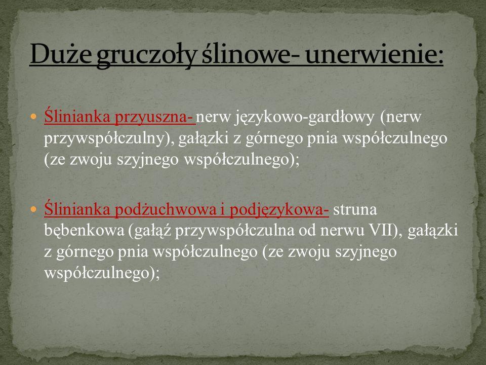 Ślinianka przyuszna- nerw językowo-gardłowy (nerw przywspółczulny), gałązki z górnego pnia współczulnego (ze zwoju szyjnego współczulnego); Ślinianka