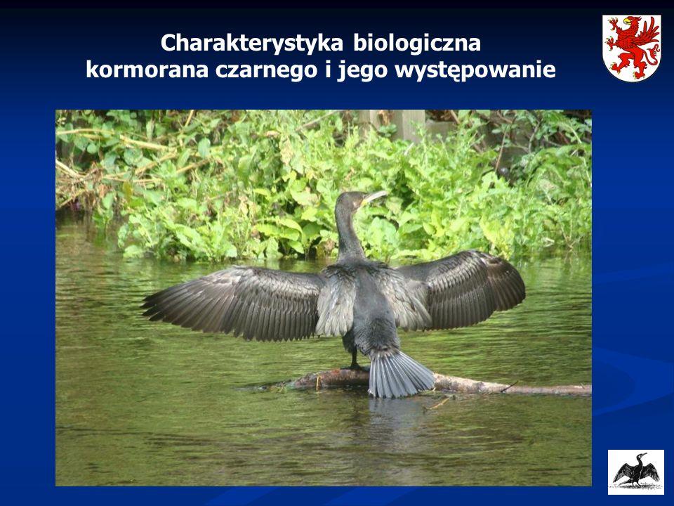Charakterystyka biologiczna kormorana czarnego i jego występowanie